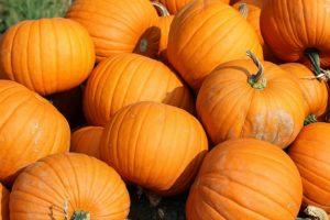 pumpkin-patch-300x200