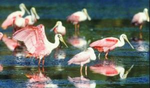 birds near Captiva Island homes