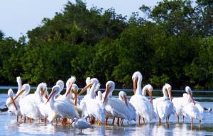 flocking to captiva island homes