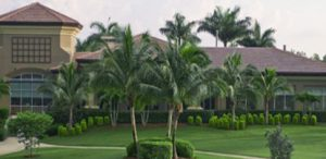 lely resort
