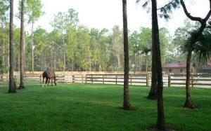 pine ridge horse