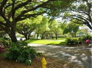 trees line streets