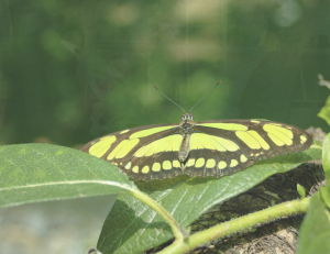 Fort Myers Butterfly Estates