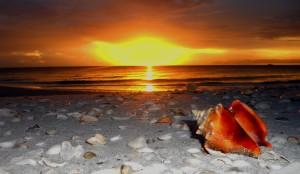 Sanibel Island beaches (conch shell photo by Bill Schiller)