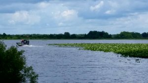 An airboat allows you to explore parts of Istokpoga unreachable by other types of craft.