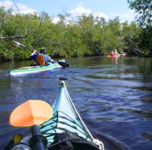 kayaking near marco island homes