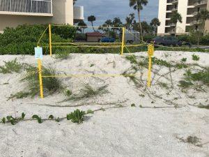 Sea Turtles found on the Sandy Beaches of SW Florida