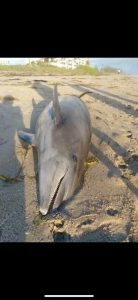 Captains For Clean Water Bonita Beach