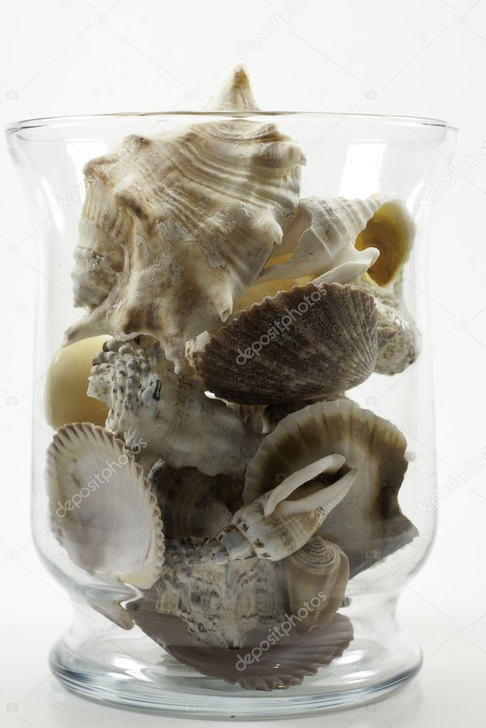 vase of shells from sanibel island