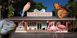 Paloma is near Everglades Wonder Gardens